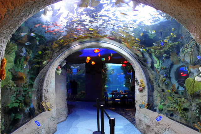 Entryway to Aquarium