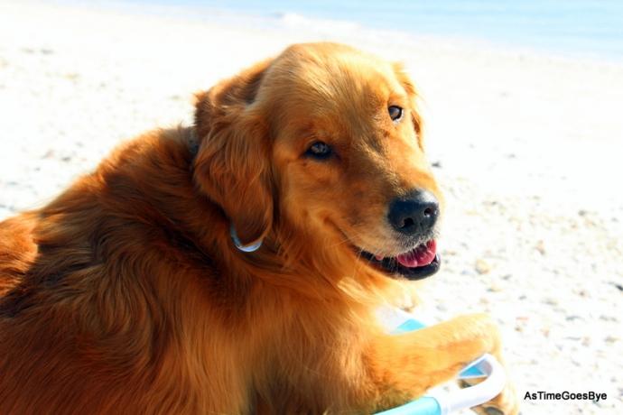 On a dog friendly Sanibel Island beach.